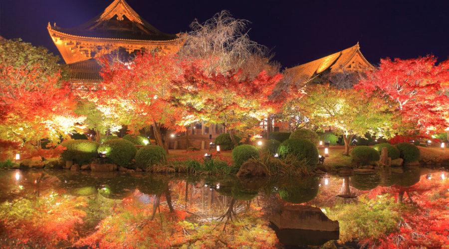 東寺 レストラン